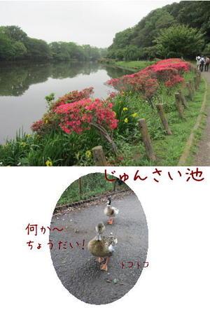 Jyunsai_2